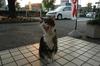 Osuwari_cat02